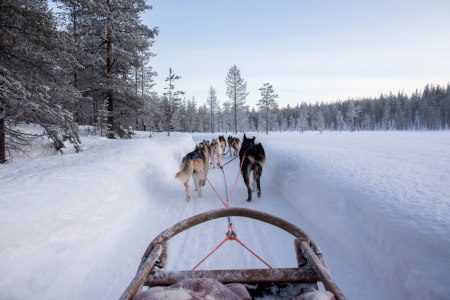 husky ride lapland